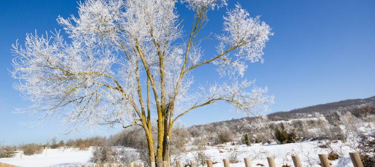 2016年は今日12月21日が冬至ですが、次の四字熟語のうち冬至を表すのにも用いられるのはどれ?